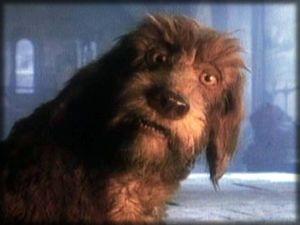 Le chien du Conteur: un peu poltron, un peu bougon, mais trés attachant!